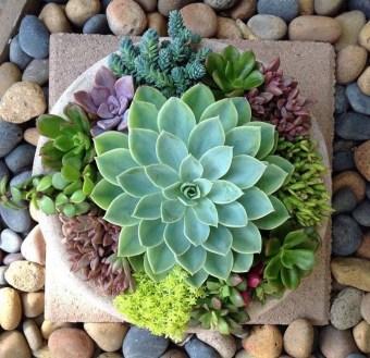 Cheap Succulent Plants Decor Ideas You Will Love04