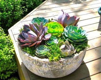 Cheap Succulent Plants Decor Ideas You Will Love09