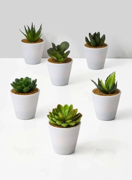 Cheap Succulent Plants Decor Ideas You Will Love13