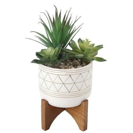 Cheap Succulent Plants Decor Ideas You Will Love15