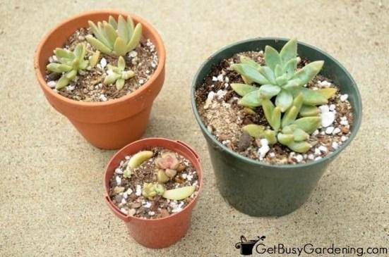Cheap Succulent Plants Decor Ideas You Will Love18