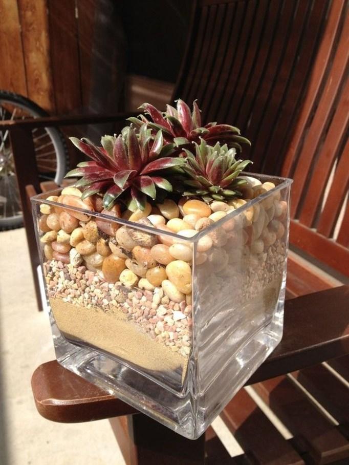Cheap Succulent Plants Decor Ideas You Will Love20