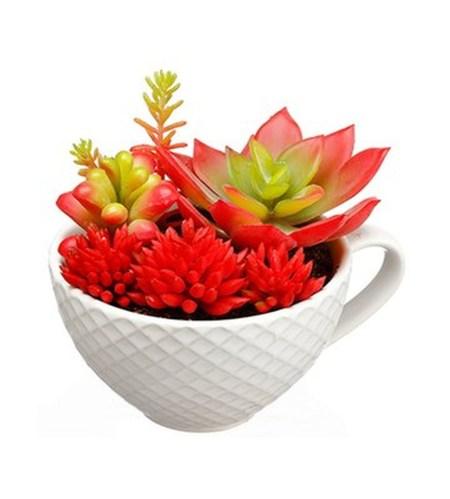 Cheap Succulent Plants Decor Ideas You Will Love21