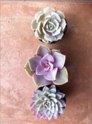 Cheap Succulent Plants Decor Ideas You Will Love26