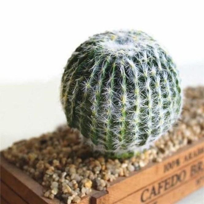 Cheap Succulent Plants Decor Ideas You Will Love34