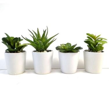Cheap Succulent Plants Decor Ideas You Will Love40