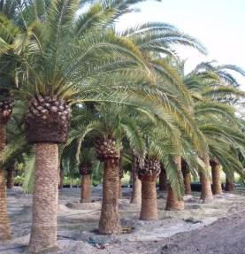 Amazing Big Tree Landscaping Ideas29