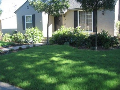 Amazing Grass Landscaping For Home Yard22