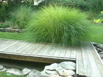 Amazing Grass Landscaping For Home Yard29