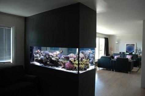 Awesome Aquarium Partition Ideas13