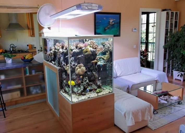 Awesome Aquarium Partition Ideas33