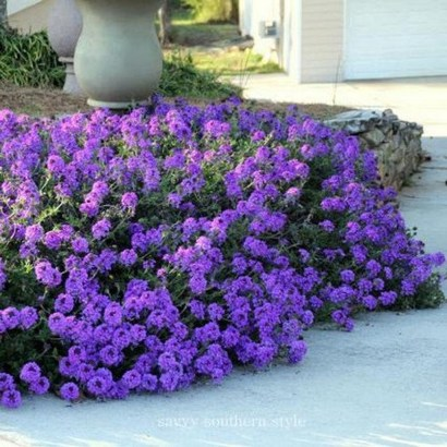 Best Plant For Your Garden On Summer34