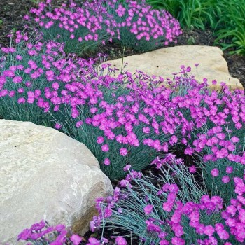 Best Plant For Your Garden On Summer36