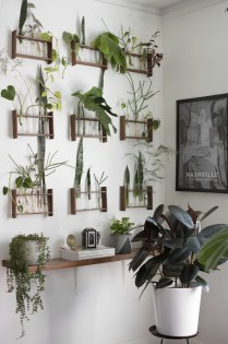 Lovely Display Indoor Plants02