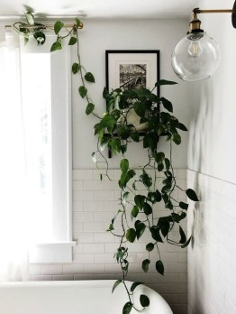 Lovely Display Indoor Plants07
