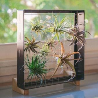 Lovely Display Indoor Plants16