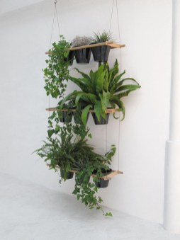 Lovely Display Indoor Plants17
