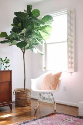 Lovely Display Indoor Plants24