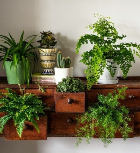Lovely Display Indoor Plants37