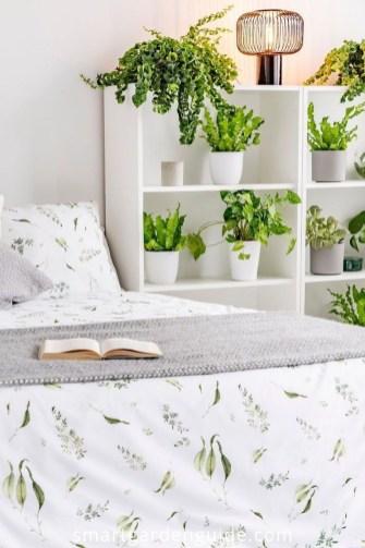 Lovely Display Indoor Plants38