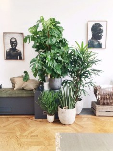 Awesome Indoor Plant Decoration Ideas To Make Natural Comfort In Your Home01