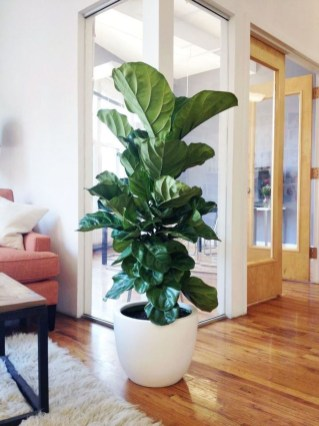 Awesome Indoor Plant Decoration Ideas To Make Natural Comfort In Your Home09