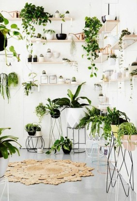 Awesome Indoor Plant Decoration Ideas To Make Natural Comfort In Your Home17