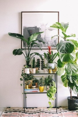 Awesome Indoor Plant Decoration Ideas To Make Natural Comfort In Your Home36