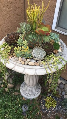 Gorgeous Succulent Garden Ideas For Your Backyard06