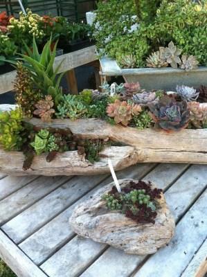 Gorgeous Succulent Garden Ideas For Your Backyard07