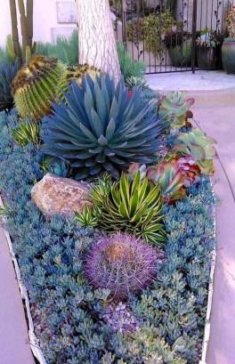 Gorgeous Succulent Garden Ideas For Your Backyard22