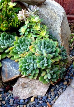 Gorgeous Succulent Garden Ideas For Your Backyard28
