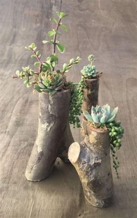 Gorgeous Succulent Garden Ideas For Your Backyard43