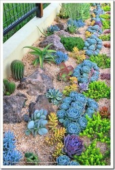 Gorgeous Succulent Garden Ideas For Your Backyard46