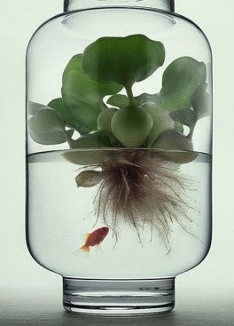 Unique And Beautiful Terrarium Design Ideas To Decorate Your Home34
