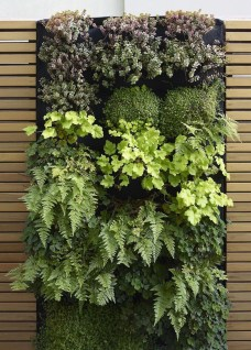 Succulents Living Walls Vertical Gardens Ideas11