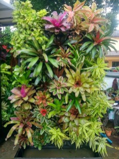 Succulents Living Walls Vertical Gardens Ideas32