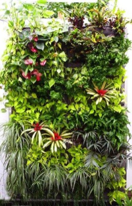 Succulents Living Walls Vertical Gardens Ideas45