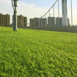 Artificial Grass (Grass Carpet) [Soft 2cm]