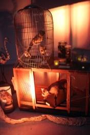 Zoo de Vincennes 30
