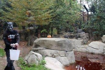 Zoo de Vincennes 77
