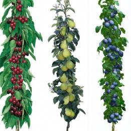 Les Fruitiers Colonnaires, Georges Delbard