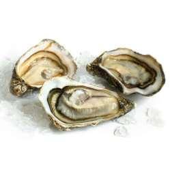 1. Huîtres creuses de Bretagne, Luximer