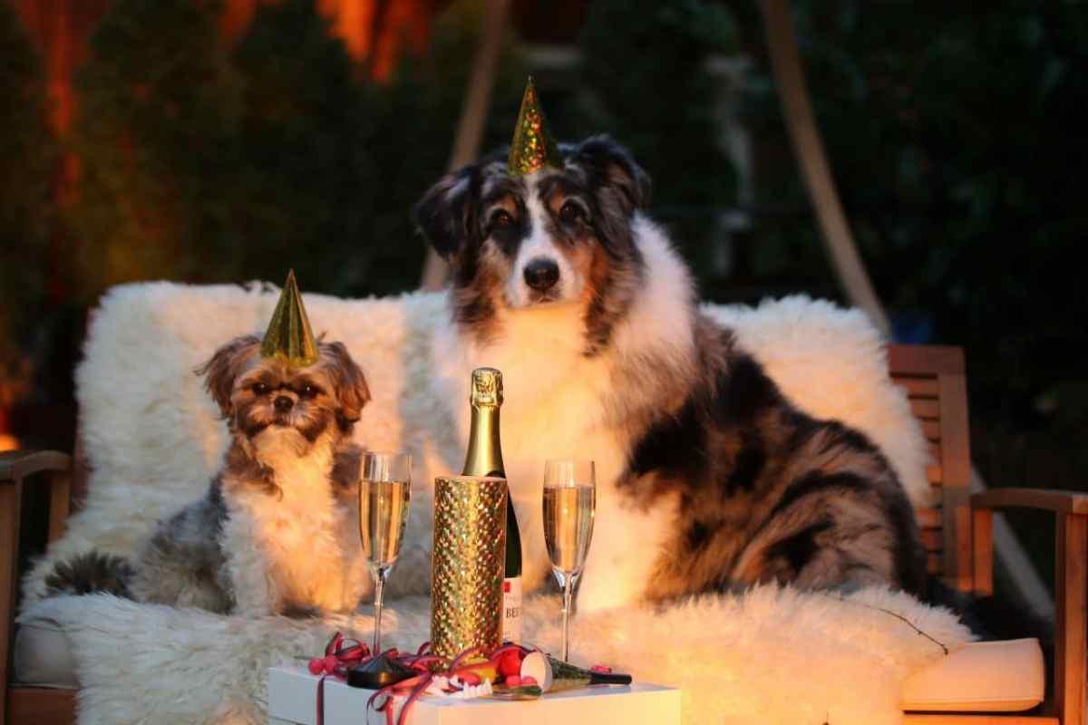 Un chien et un chat vous souhaitent la bonne année