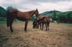 Konji-horde_0010