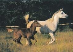 Konji-pari_0009