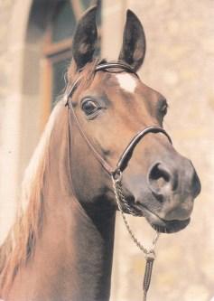 Konji_0001