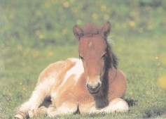 Konji_0002
