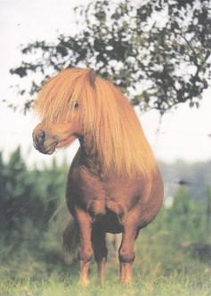 Konji_0004