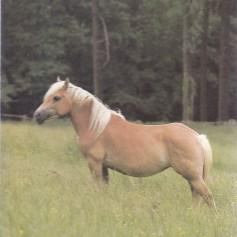 Konji_0005